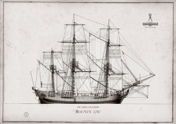 1787 HM Armed Transport Bounty pen ink study